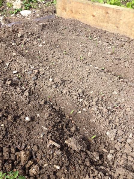 Beetroot & Corn outdoors