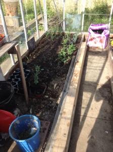 Greenhouse progress