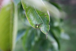 Green Spider - Garden Friends
