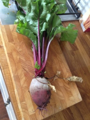 1st Beetroot