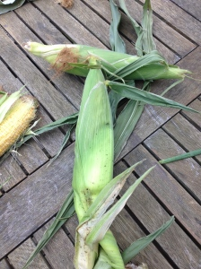 1st Sweetcorn