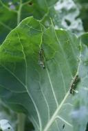 I now have a Caterpillar Farm!!!!